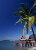 Pantai Kok beach at The Summer Palace with a coconut palm tree hanging out over the waterThe film set for Anna And The King Asian Beaches Malaysian Resort Sand Sandy Seaside Shore Southeast Asia Tour...