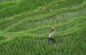 Man waving from rice terraces on the foothills of  the volcano