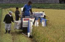 Farm workers harvesting rice field on motorised harvester