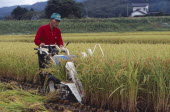Male farm worker harvesting rice fields with a hand held machine