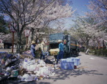 Maruyama Park rubbish collection during Cherry Blossom season