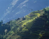 Village house and crops growing on mountain terraces.