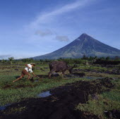 Man ploughing with bullock with the peak of the Mayon volcano behind.