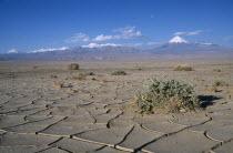 Cracked earth of desert surface near San Pedro de Atacama with snow capped peak of Volcano Lincancabur beyond.5916 m