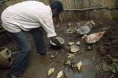 Self Reliance Project.  Refugee feeding ducks and ducklings.