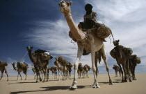 Touareg camel caravan.