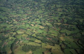 Aerial landscape over fields of crops and lush vegetation.