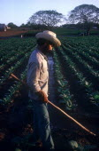 Tobacco farm worker