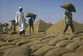 Workers building pyramids made from sacks of groundnuts
