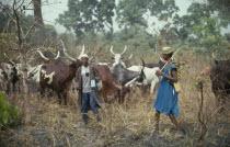 Fulani herdsmen with longhorn cattle