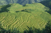 Rice terraces on hilltops