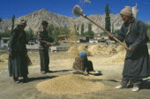 Farm workers sifting wheat