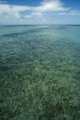 Clear shallow water