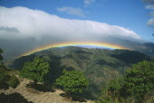 Rainbow and bank of cloud over coffee plantation trees