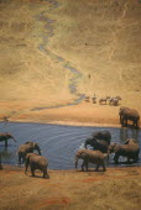 African Elephant herd  loxodonta africana  at watering hole on dry savannah in Tsavo Kenya