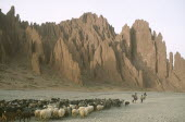Shepherd woman returning home for the night with her flock of sheep and goats in area near Palala and Tupiza.
