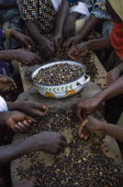 Cropped view of women s group near Accra sorting palm nuts to make palm nut oil.West Africa
