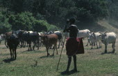 Samburu cattle herder.