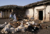 Sheep farmer and family outside remote village home with small flock in foreground.
