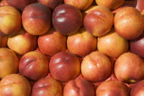 French Market. Detail of Nectarines on market stallGreat Britain United Kingdom UK
