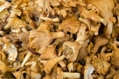 Finferli or Chanterelle mushroom for sale in the Rialto Market