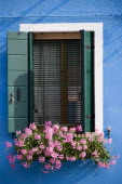 Pink geraniums in a window box below a shuttered window on a colourful blue building on the lagoon island of Burano