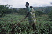 Woman refugee working in a cassava field carrying her baby on her back while hoeing.Refugees from the Congo and Rwanda fleeing conflict in Burundi Zaire African Babies Burundian Central Africa Easter...