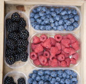 ITALY, Tuscany, Siena, Blackberries Blueberries and Raspberries displayed in containers outside a grocery shop.
