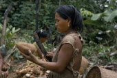 Barasana woman using a machete to peel manioc roots. Tukano sedentary Indian tribe North Western Amazonia cassava American Colombian Columbia Female Women Girl Lady Hispanic Indegent Latin America La...