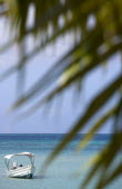 Coconut palm tree leaves on Morne Rouge Beach known locally as BBC Beach with a motor boat in the turqoise sea beyondBeaches Resort Sand Sandy Scenic Seaside Shore Tourism West Indies Caribbean Grena...