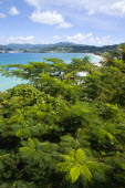 Grand Anse Beach seen across the tops of trees looking towards the inland hills surrounding the bayScenic West Indies Beaches Caribbean Grenadian Greneda Resort Sand Sandy Seaside Shore Sunbather Tou...