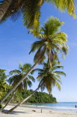 Coconut palm trees on the shore of La Sagesse Beach with people in the water and on the beachScenic West Indies Beaches Caribbean Grenadian Greneda Holidaymakers Resort Sand Sandy Seaside Sunbather T...