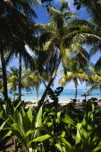 Tamarind Beach with tourists on the sand and boats at anchor seen through coconut palm treesScenic West Indies Beaches Caribbean Holidaymakers Resort Sandy Seaside Shore Sunbather Tourism Travel Wind...