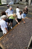 Tourists with local guide looking at and touching cocoa beans drying in the sun on racks at the Dougaldston Estate.Caribbean Destination Destinations Grenadian Greneda West Indies Grenada Farming Agr...
