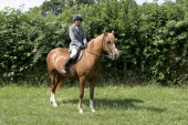 Sport, Equestrian, Horse and rider.