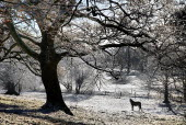 Ireland, County Sligo, MarkreeCcastle grounds, horse standing in frost covered landscape with overhanging tree.