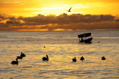 Mexico, Jalisco, Puerto Vallarta, Playa Olas Altas, Pelicans and fishing boat silhouetted on water at sunset.