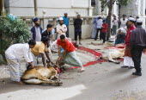 Bangladesh, Dhaka, Gulshan, Animals slaughtered in the street for the Muslim Eid-ul-Azha festival.