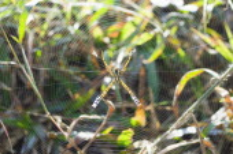 Bangladesh, Srimongal, Spider and fine web.