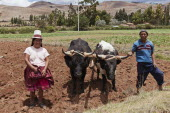 Peru, Chinchero, Husband and Wife farmers with their Oxen.