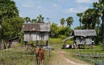 Cambodia, Rural  stilt housing.
