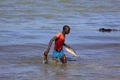 Gambia, Tanji Beach, Young Fisherman in sea wearing T-Shirt and shorts with fish in both hands.