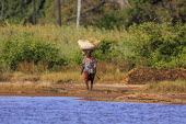 Gambia, Woman walking bare footed towards water carrying straw on her head.