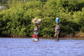 Gambia, Two women crossing water in bare feet carrying walking stick and rice in bucket and straw on their heads.