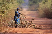 Gambia, Woman collecting branches on dirt road.