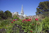 England, West Sussex, Chichester, Cathedral spire seen from Bishops gardens