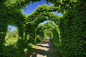 Ireland, County Offaly, Birr Castle current home of the 7th Earl of Rosse, The Hornbeam Cloister Hedges in the castle gardens.