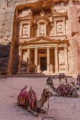 Jordan, Petra, Camels in front of Al Khazneh or the Treasury in the Nabataean city of Petra in the Petra Archeological Park is a Jordanian National Park and a UNESCO World Heritage Site.