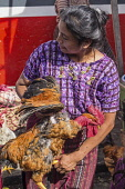 Guatemala, Solola Department, Santiago Atitlan, A Mayan woman in a traditional huipil blouse carries the live rooster she just bought in the weekly open market.