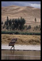China, Ningxia, Man carrying sheep hide raft along the Yellow River.